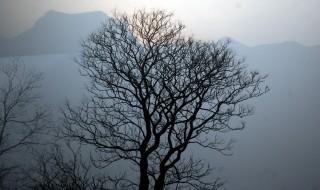 tree_silhouette_194091